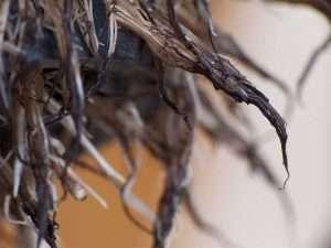 How to Prevent Root Rot - Indoor Gardening | Root Grow Bloom