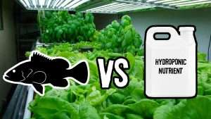 Aquaponics vs. Hydroponics | Root Grow Bloom