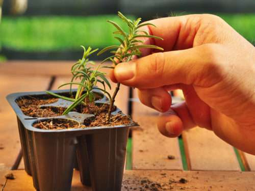 Tips for Taking Plant Cuttings | Root Grow Bloom