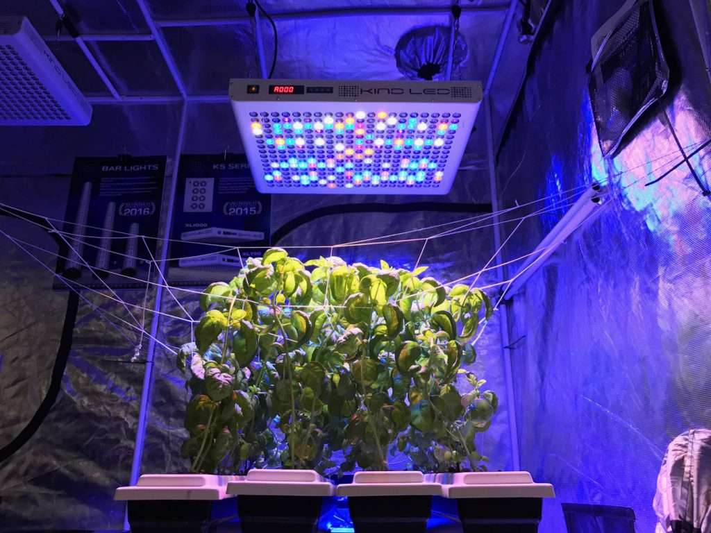 How to Prevent Odor in Your Grow Room | Root Grow Bloom