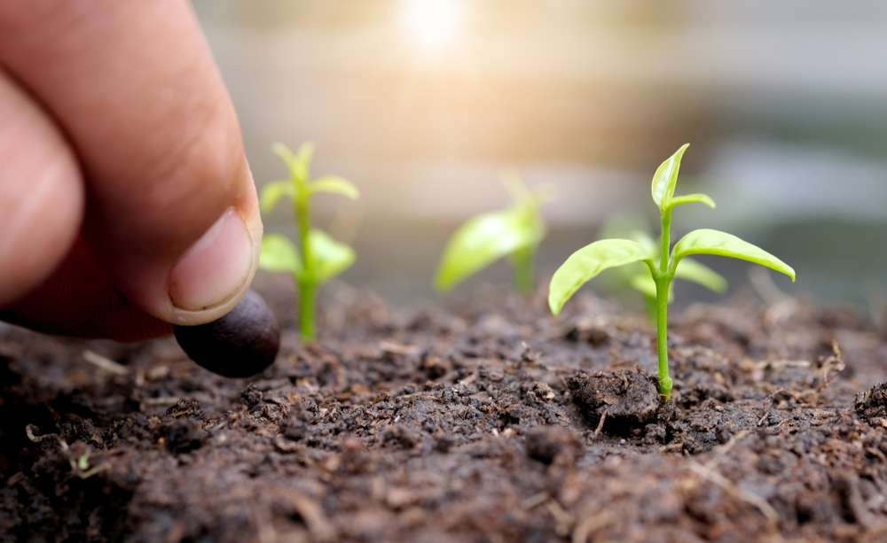 4 Tips to Cultivate Healthy Soil | Root Grow Bloom