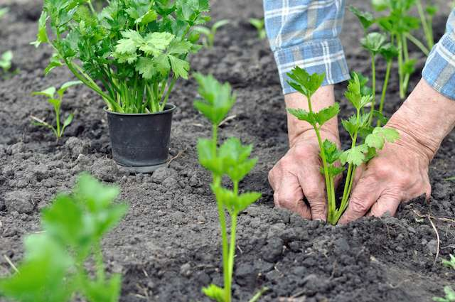 How to Grow Plants in Florida   Root Grow Bloom