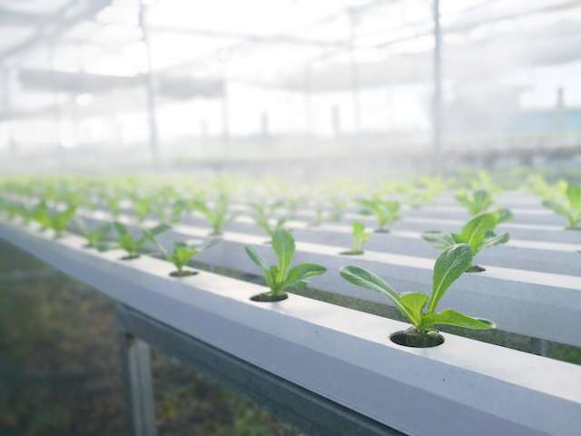 6 Tips to Save Water wit Hydroponics and Outdoor Gardening