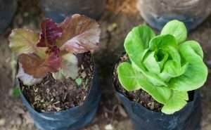 Micronutrients that Keep Your Plants Healthy
