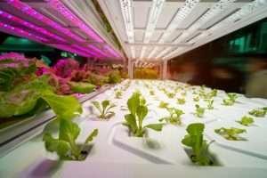 Understanding Grow Lights 101-New