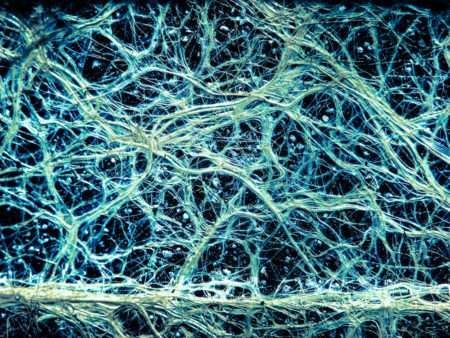 What You Need to Know About Mycorrhizae | Root Grow Bloom