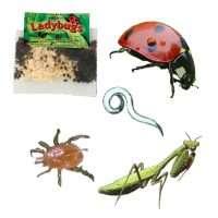 Beneficial Bugs