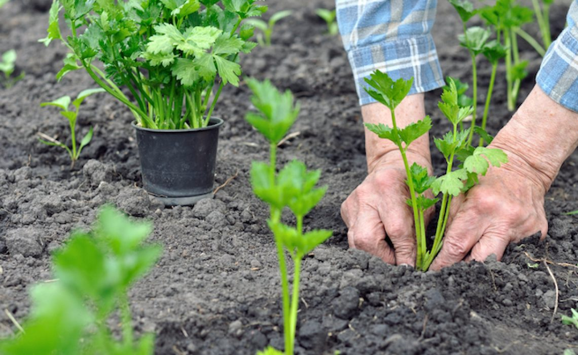 How to Grow Plants in Florida | Root Grow Bloom