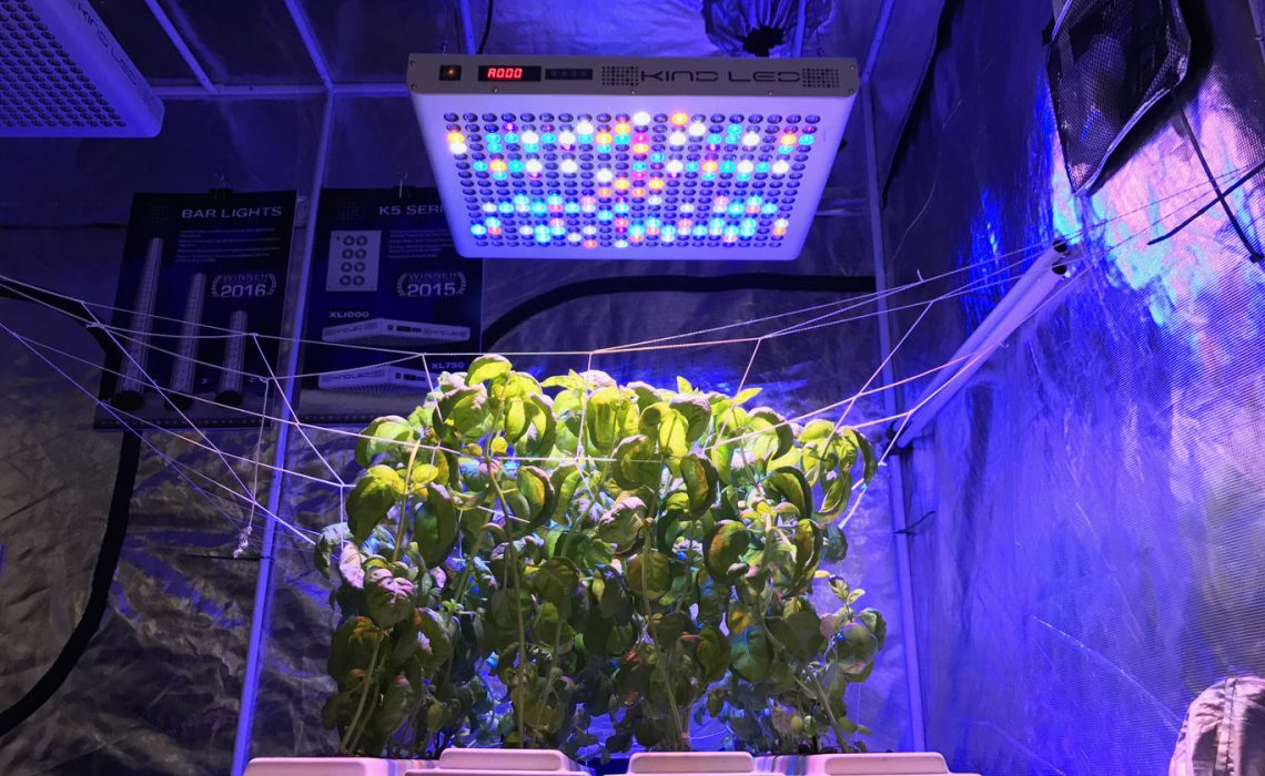 How to Prevent Odor in Your Grow Room   Root Grow Bloom